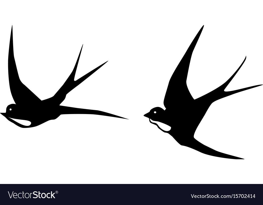 Swallows birds