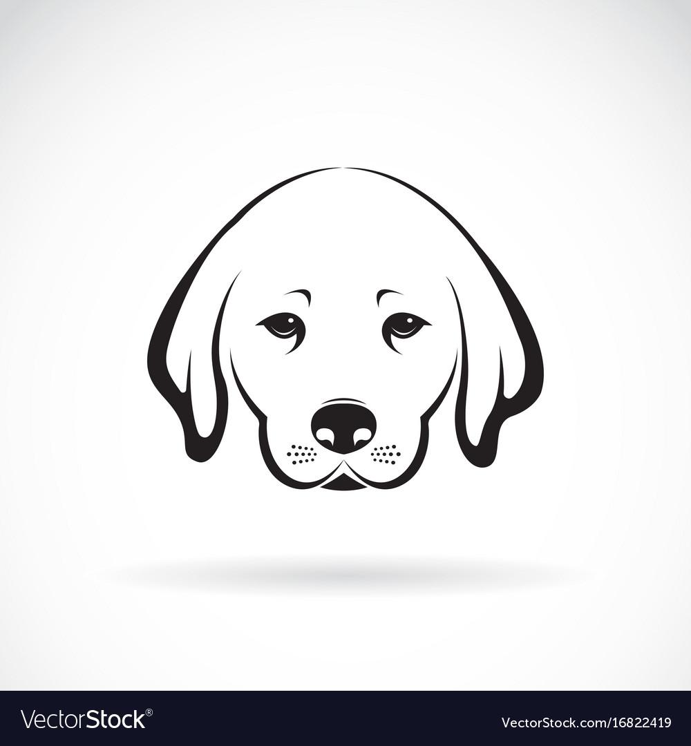 Labrador dog head on white background pet animal