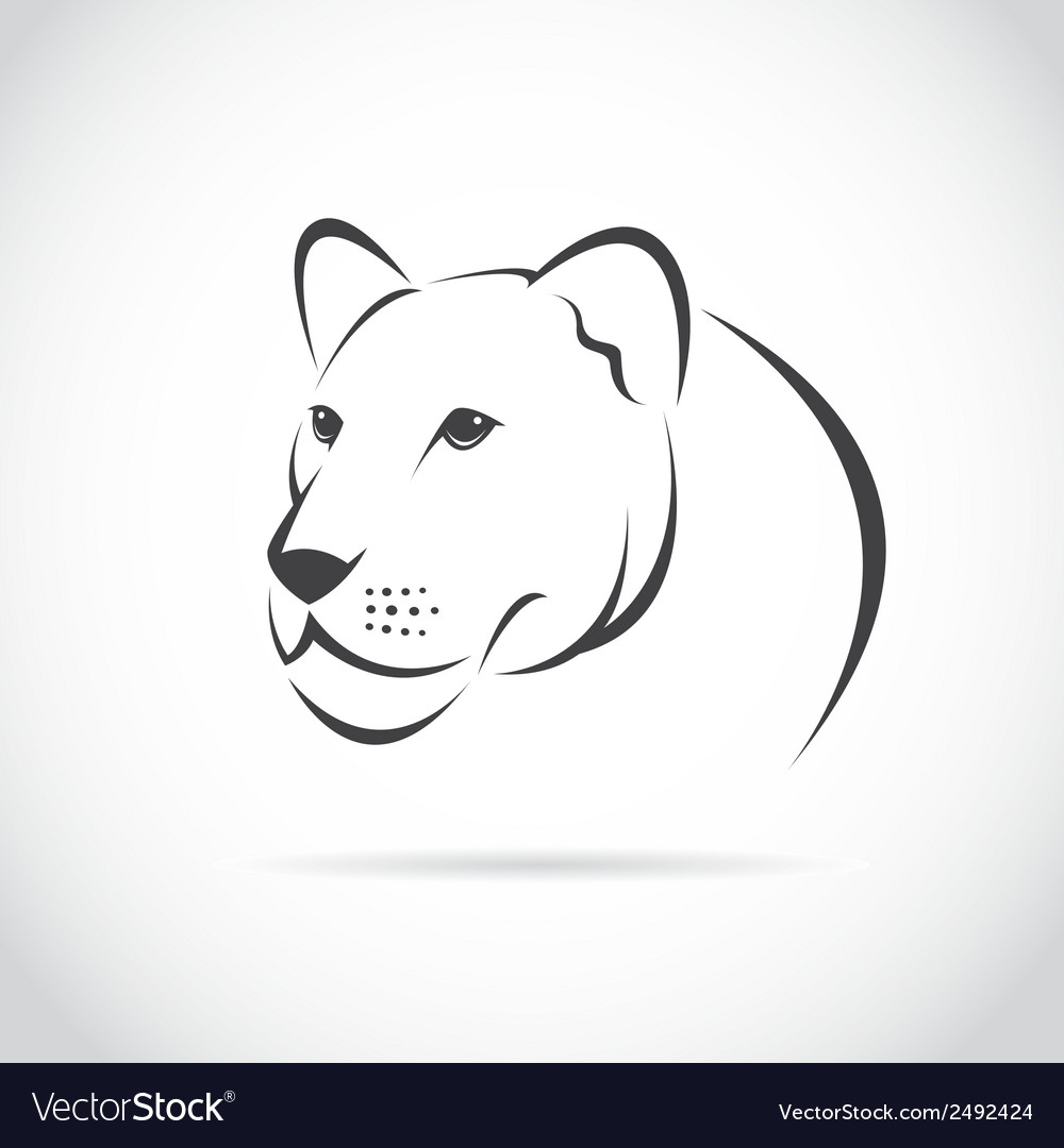 Image of an female lion head