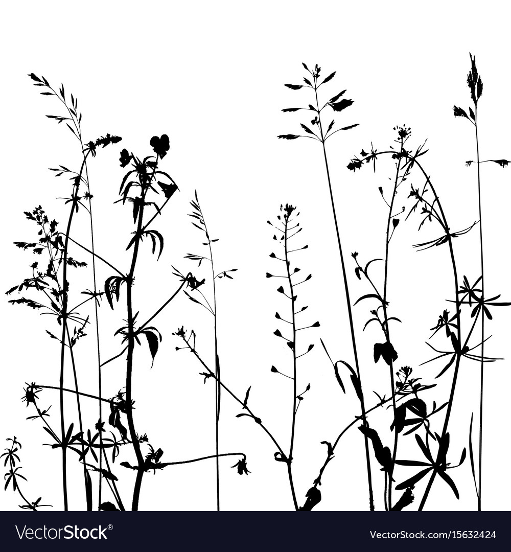 Wild plants silhouettes