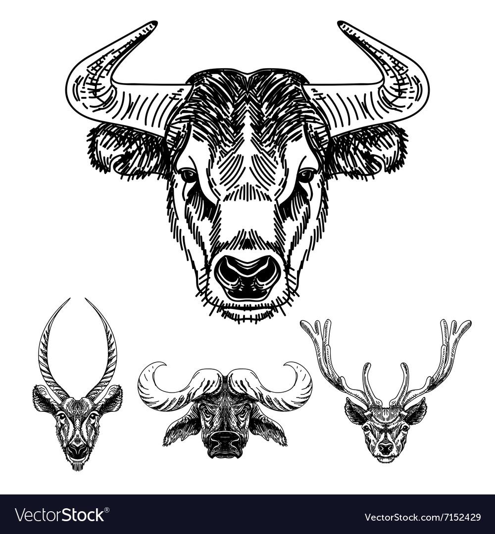 Set hand drawn animal sketch