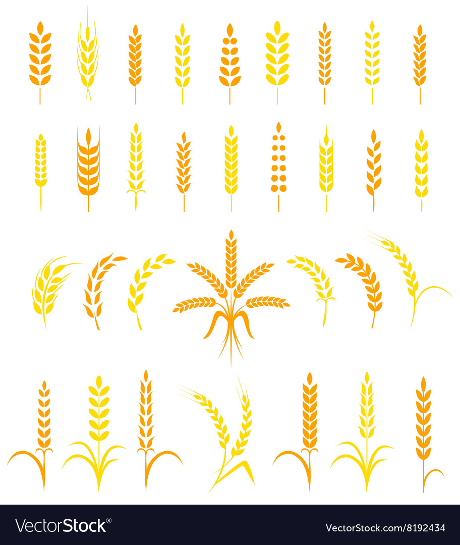 Set of simple and stylish Wheat Ears icons vector image
