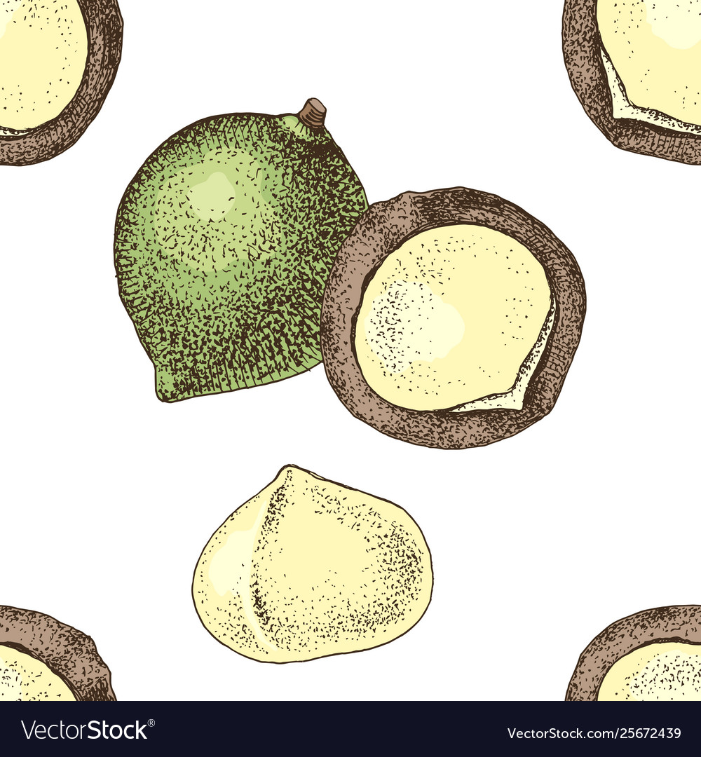 Seamless pattern with hand drawn macadamia nuts