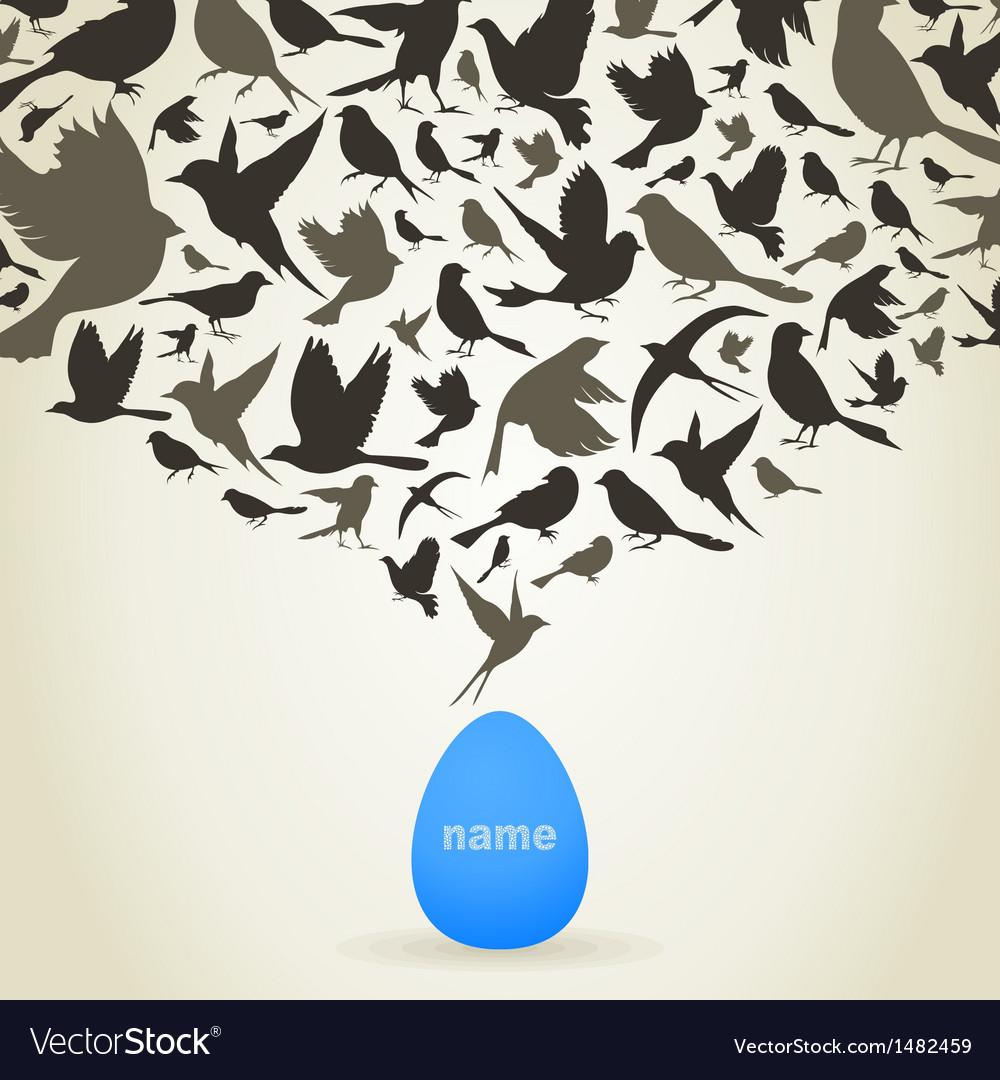 Birds from egg