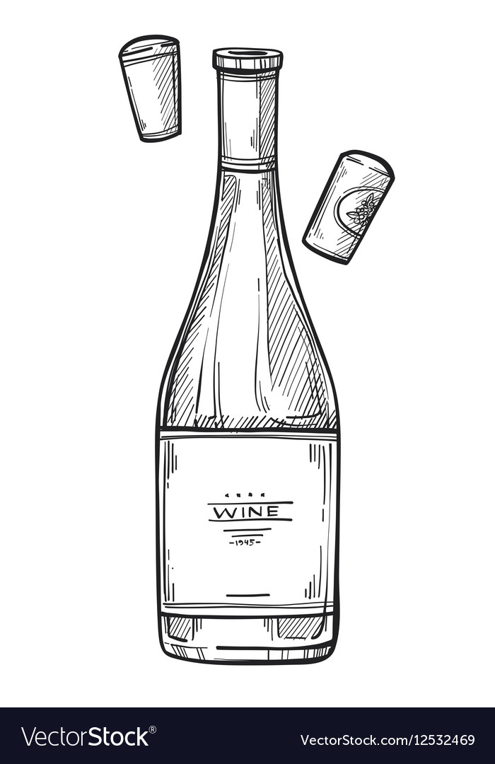 bottle of wine freehand pencil drawing royalty free vector