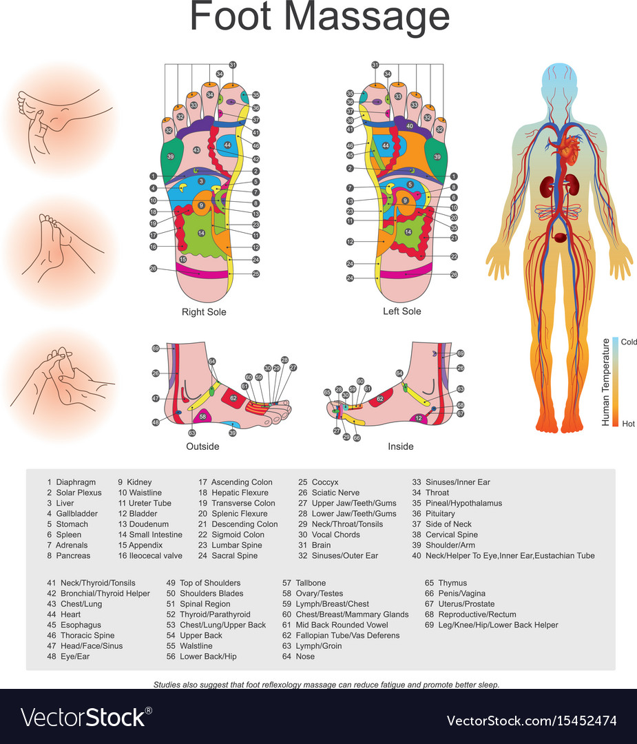 Foot Massage Point Charts Royalty Free Vector Image