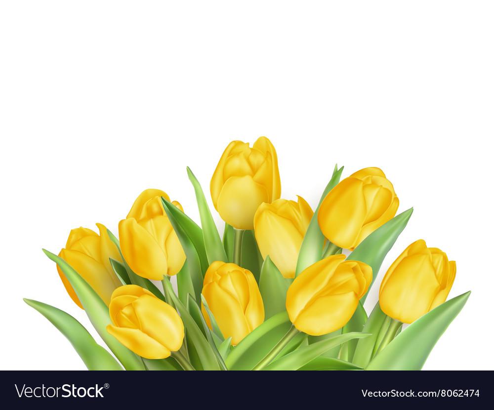 Yellow Tulips Flowers EPS 10
