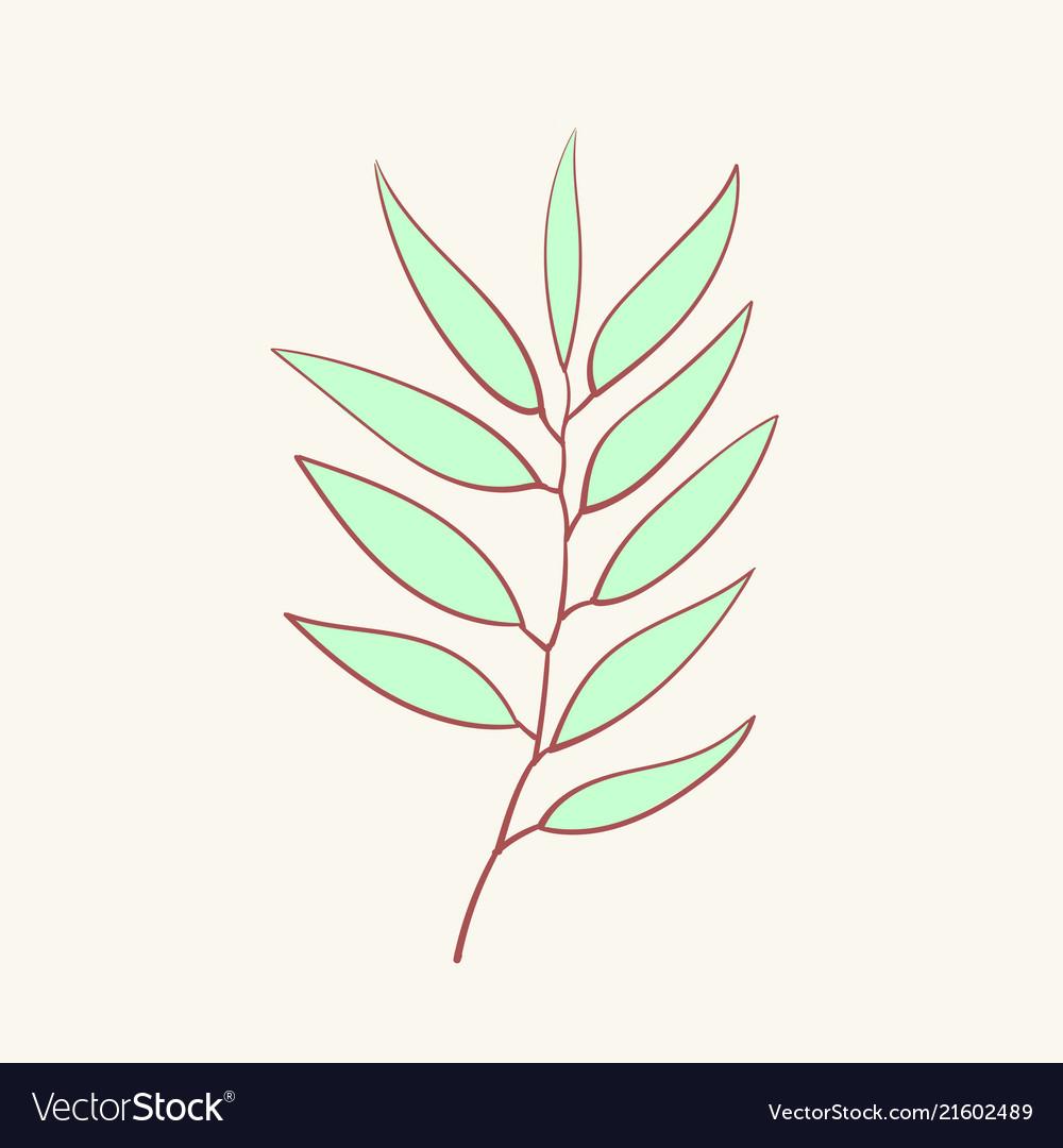 Eucalyptus blue agonis thyme asparagus herbal