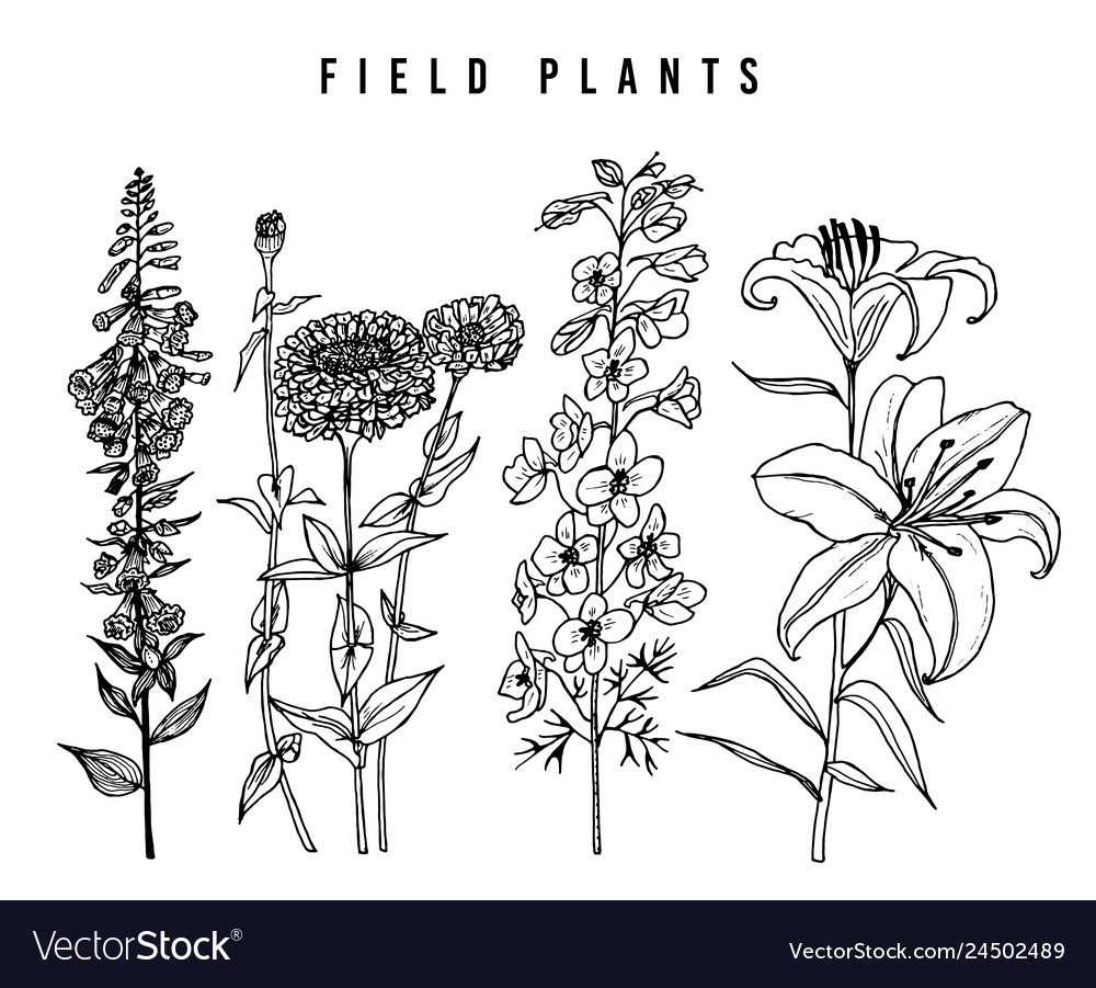 Field flowers with leaves set wedding
