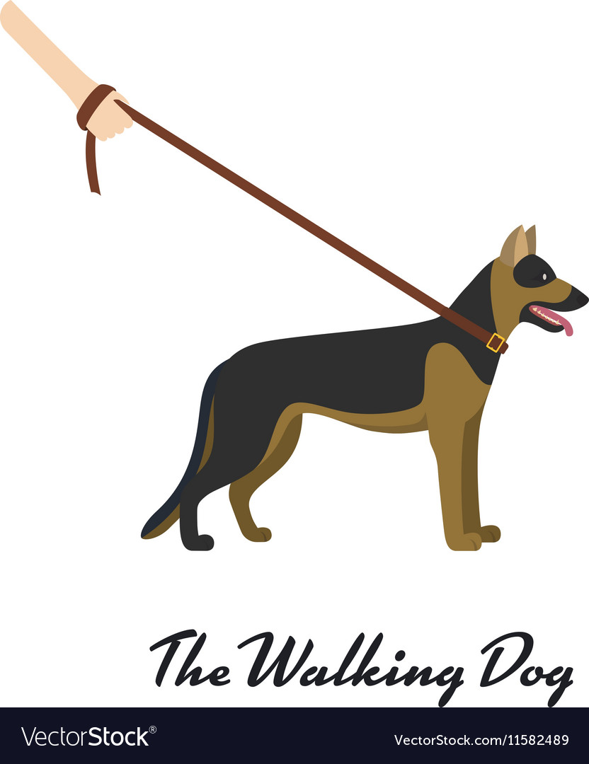 German shepherd with a leash - on white background