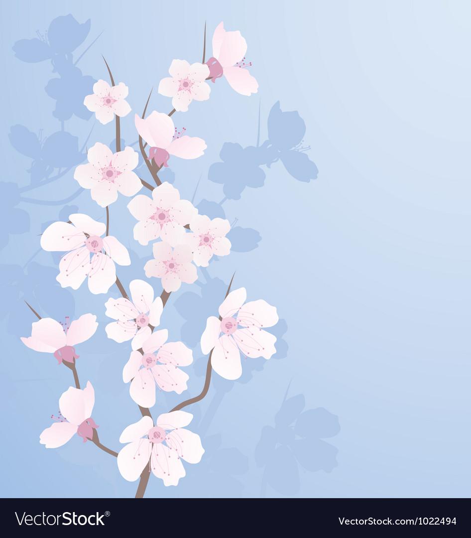 Cherry branch vector image