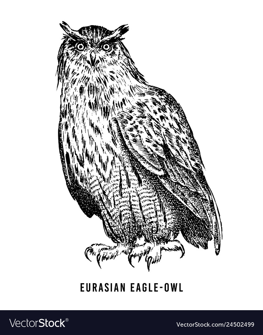 Eurasian eagle owl wild forest bird of prey hand