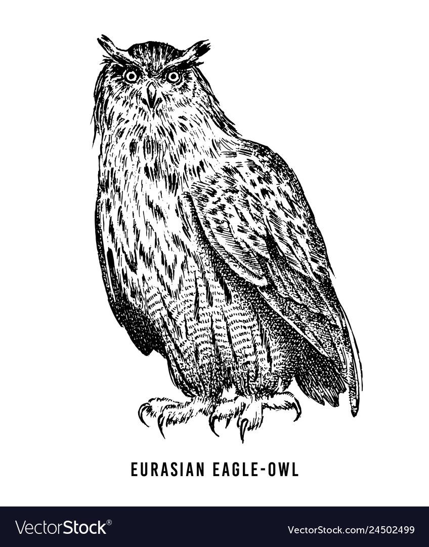 Eurasian eagle owl wild forest bird prey hand
