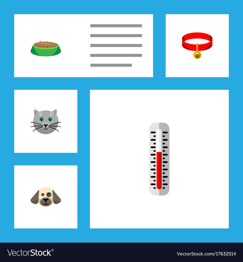 Flat icon pets set of kitty kitty collar puppy