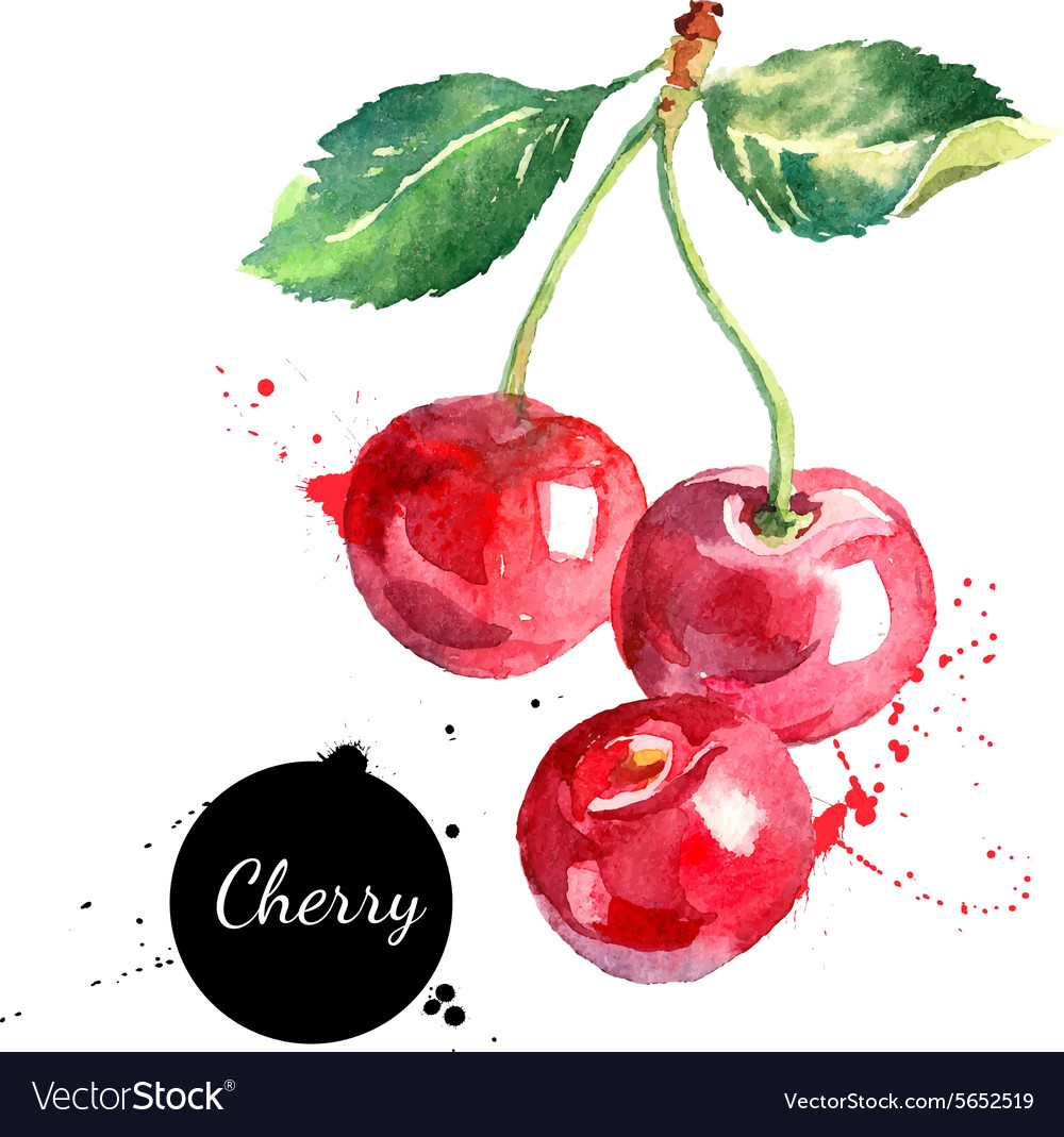 Hand drawn watercolor painting cherry on white