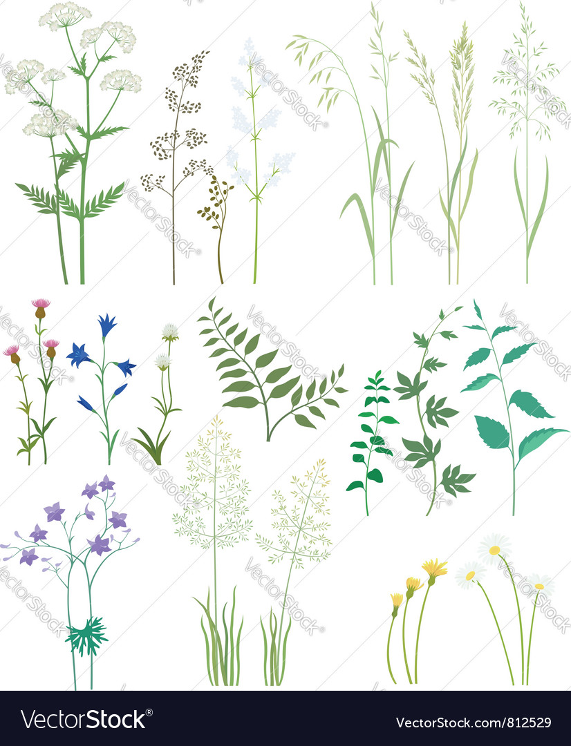 Gr And Wild Flowers Vector Image