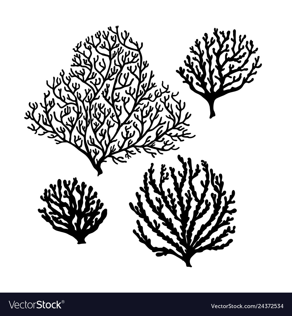 Set of sea reef corals black silhouette isolated