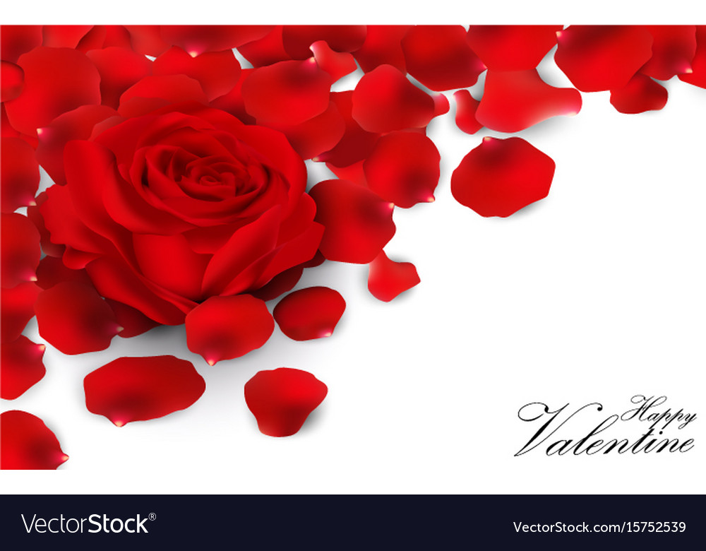 Red roses and rose petals on white background vector image