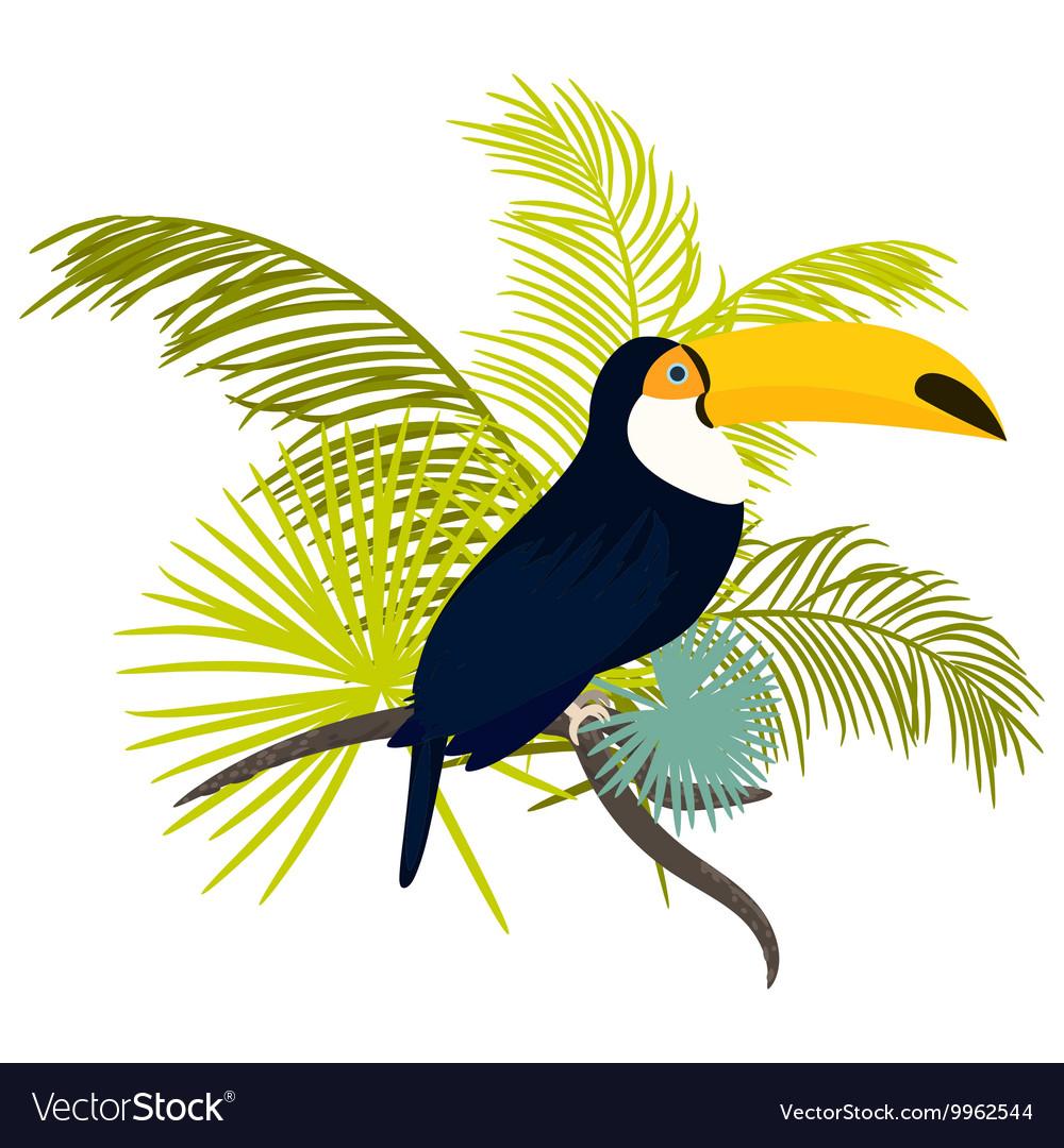 Toucan bird for tshirt apparel