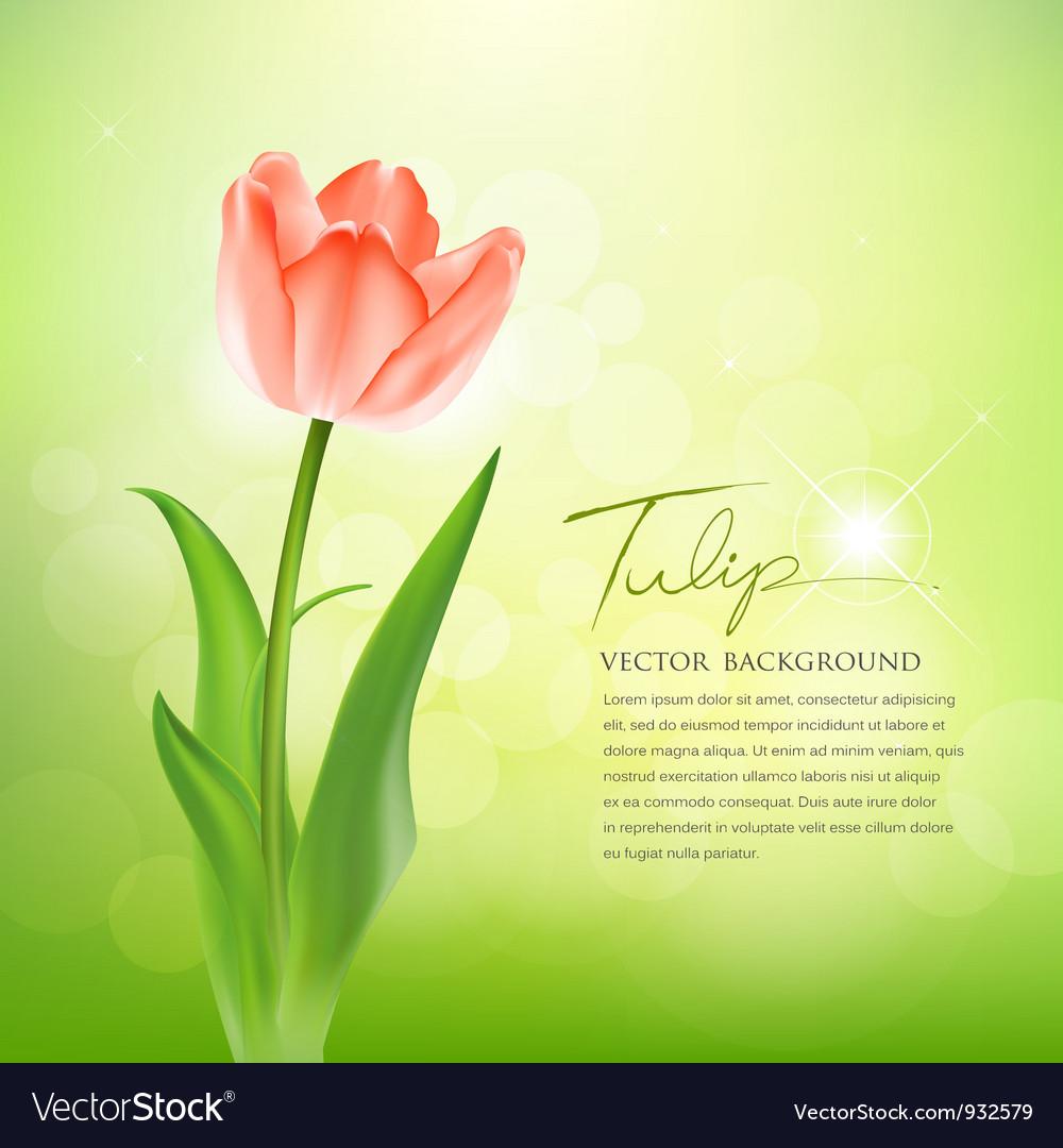 Beautiful tulips on nature