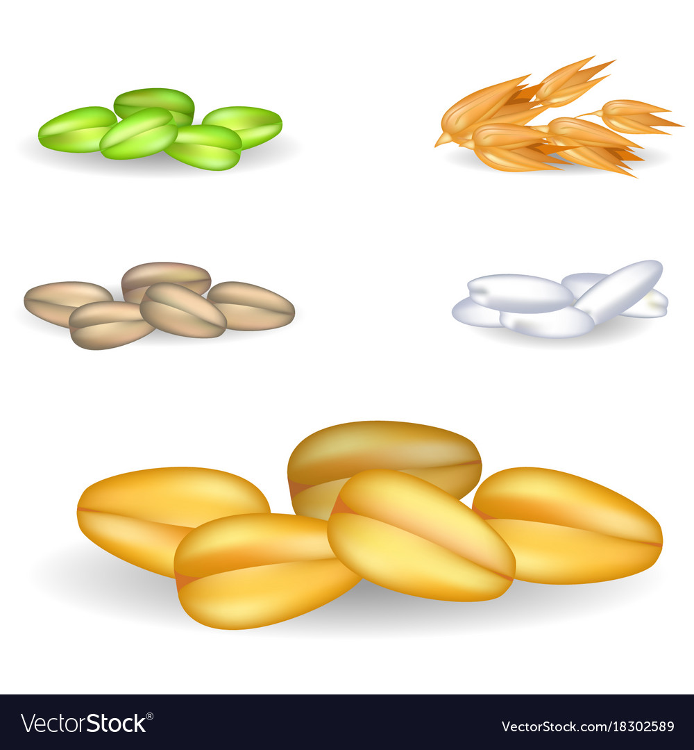 Wheat grain pile with small heaps on background vector image