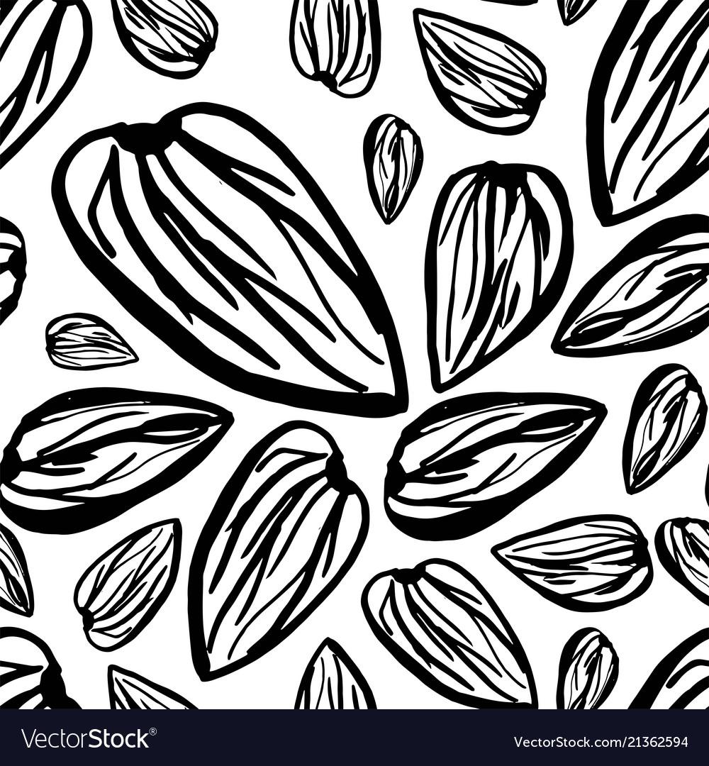 Sketch almonds pattern on white background