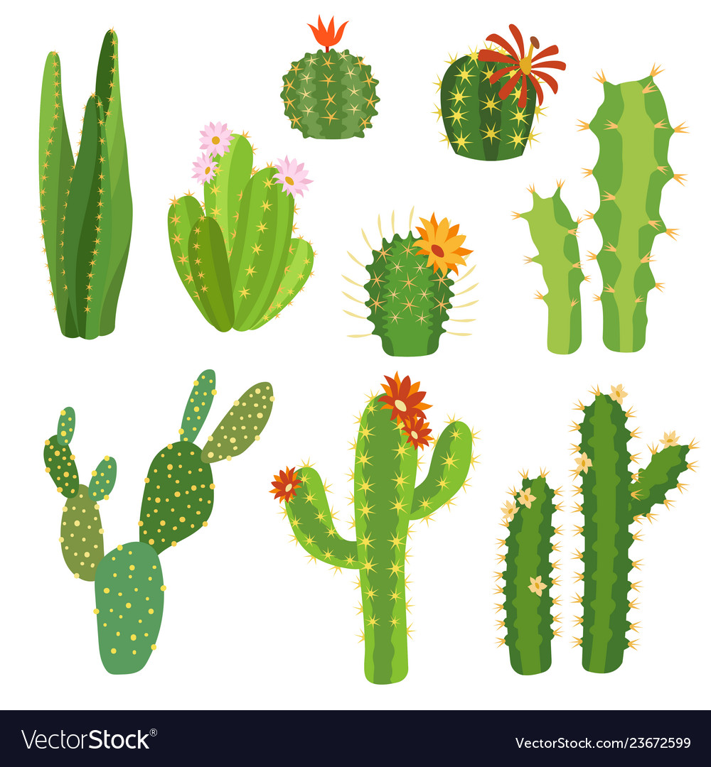 Cactus Flower Bright Cacti Aloe Leaves Exotic Vector Image