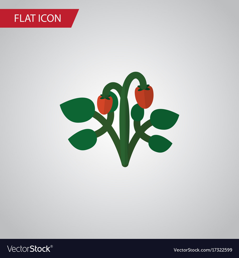 Isolated strawberry flat icon berry