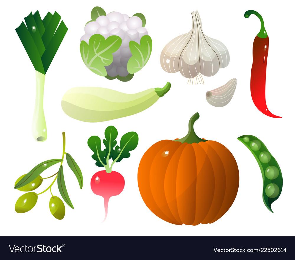 Different vegetables pumpkin zucchini pepper city