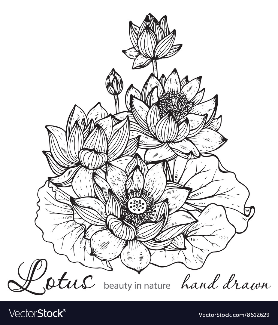 Beautiful monochrome floral bouquet of lotus