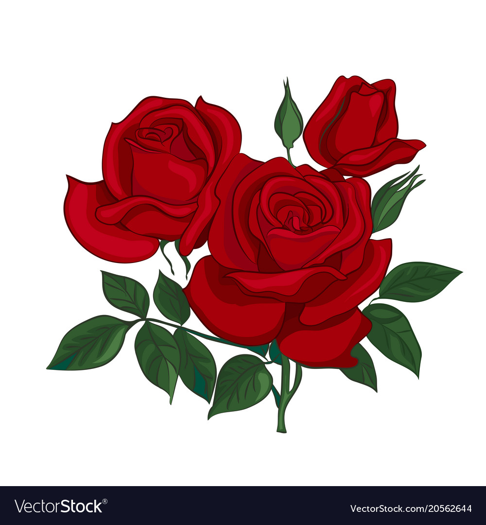 Bouquet of red roses royalty free vector image bouquet of red roses vector image izmirmasajfo