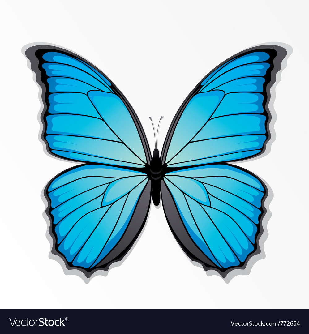 blue and black butterfly royalty free vector image