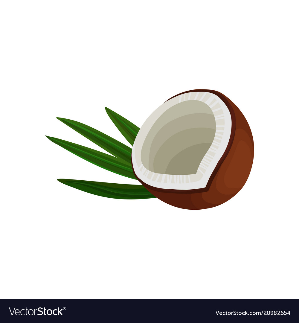 Half of brown coconut and green leaf tropical vector image