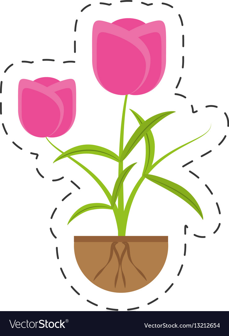 Tulip Flower Growing Plant Royalty Free Vector Image