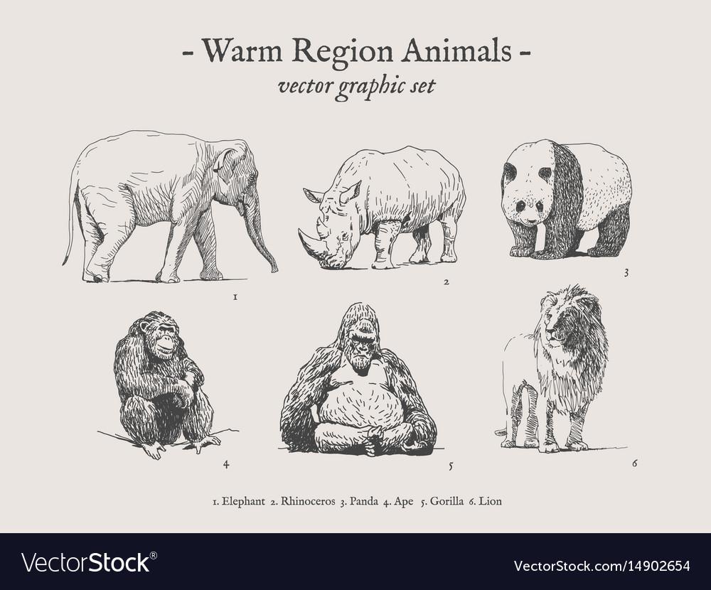 Warm region animals vintage set