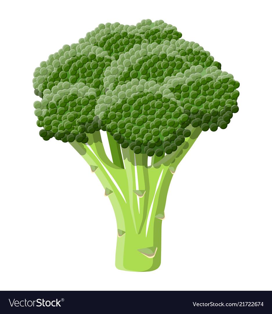 Green broccoli vegetable