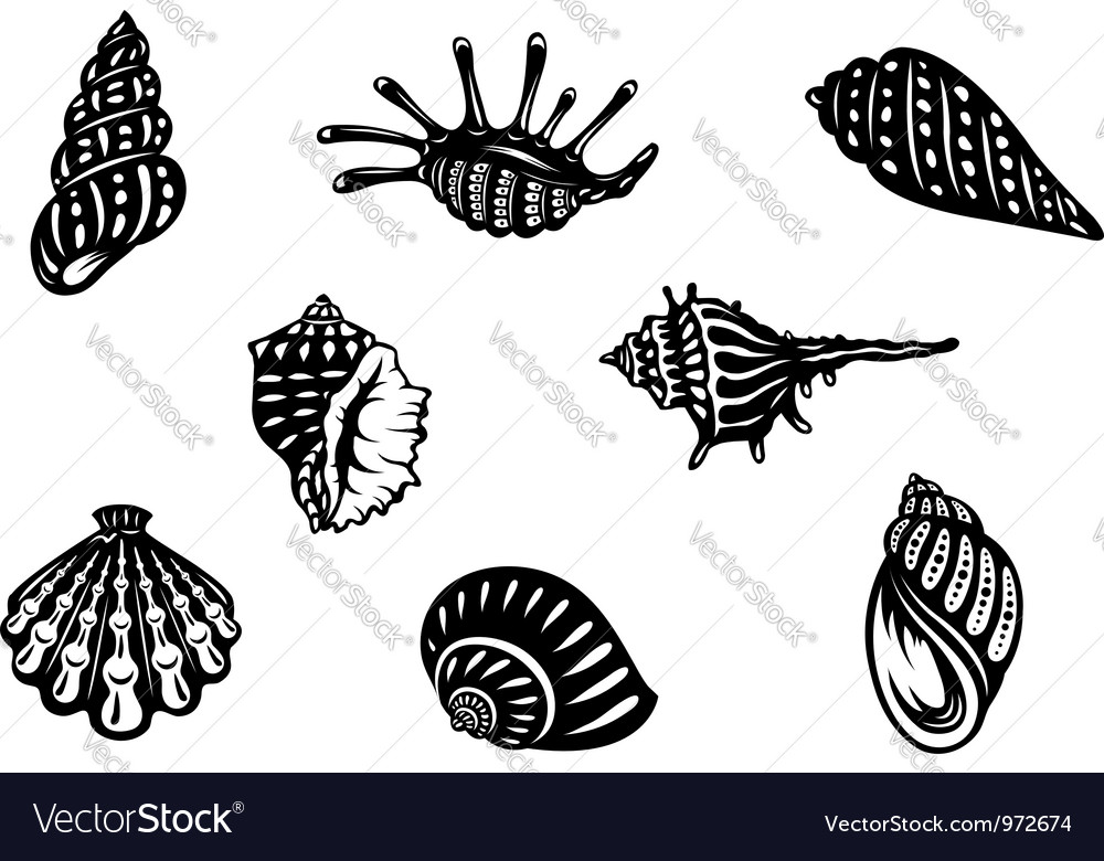 Sea shells and mollusks vector image