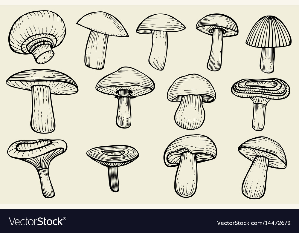 Mushrooms collected vector image