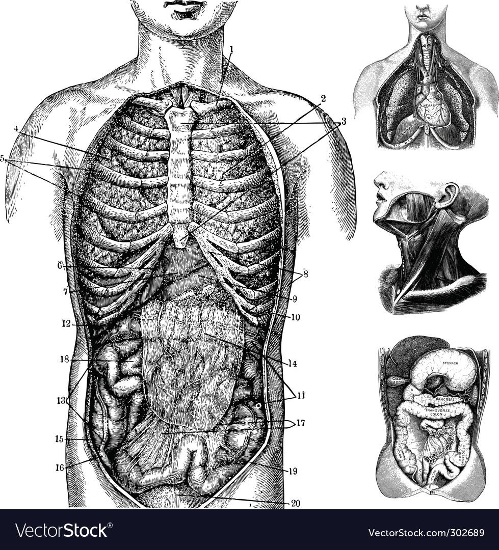 Anatomical cutaways