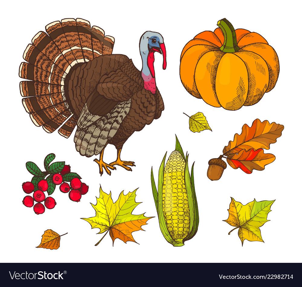 Pumpkin and autumn symbols harvest set