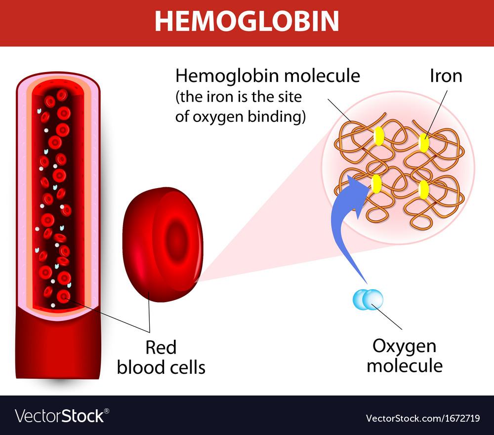 Molecule haemoglobin