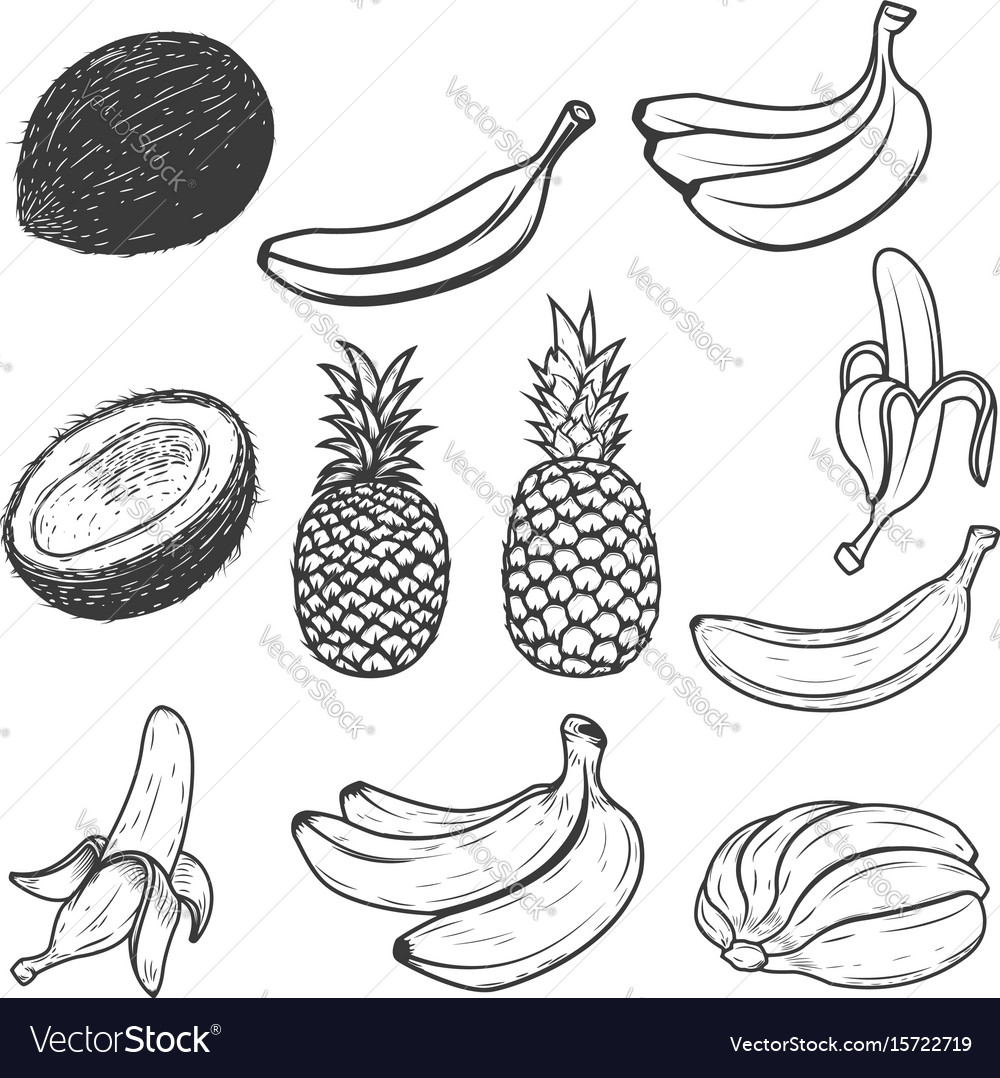 Set of tropical fruits isolated on white vector image
