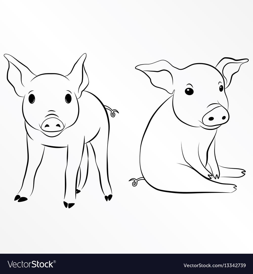 Pig piglet piggy swine hog eps 10
