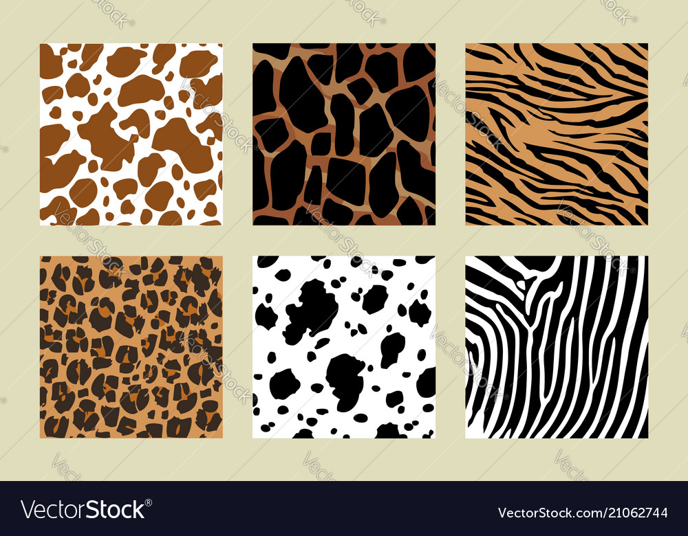 Animal skin pattern six different pattern vector image