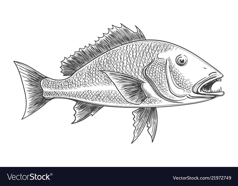 Fish retro ink sketch