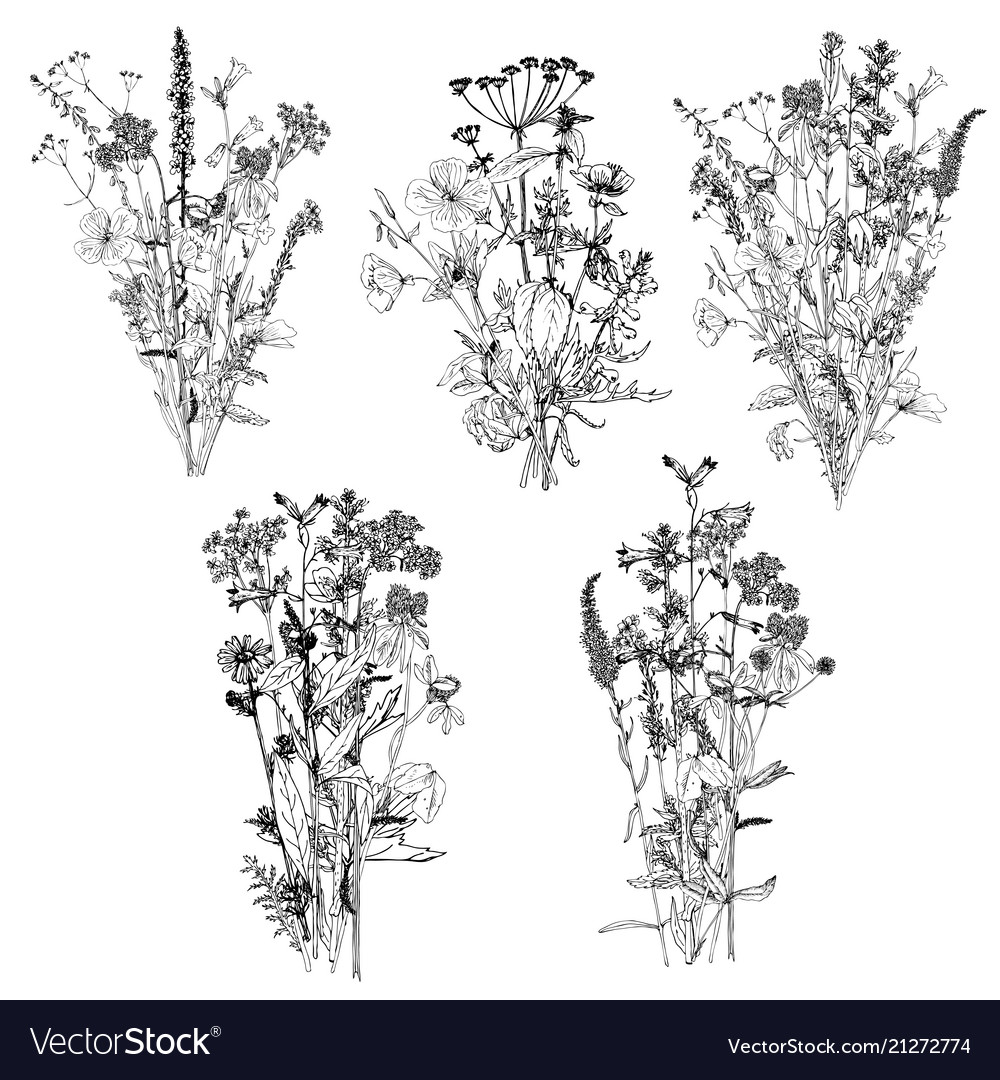 Bouquets With Drawing Wild Plants Royalty Free Vector Image