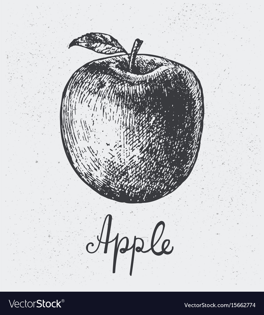 Hand drawn apple engraving style hand