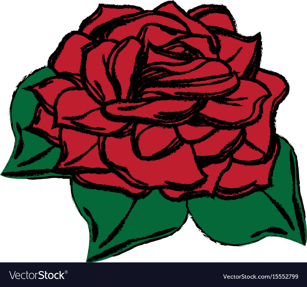 Red flower rose natural beauty decoration vector image