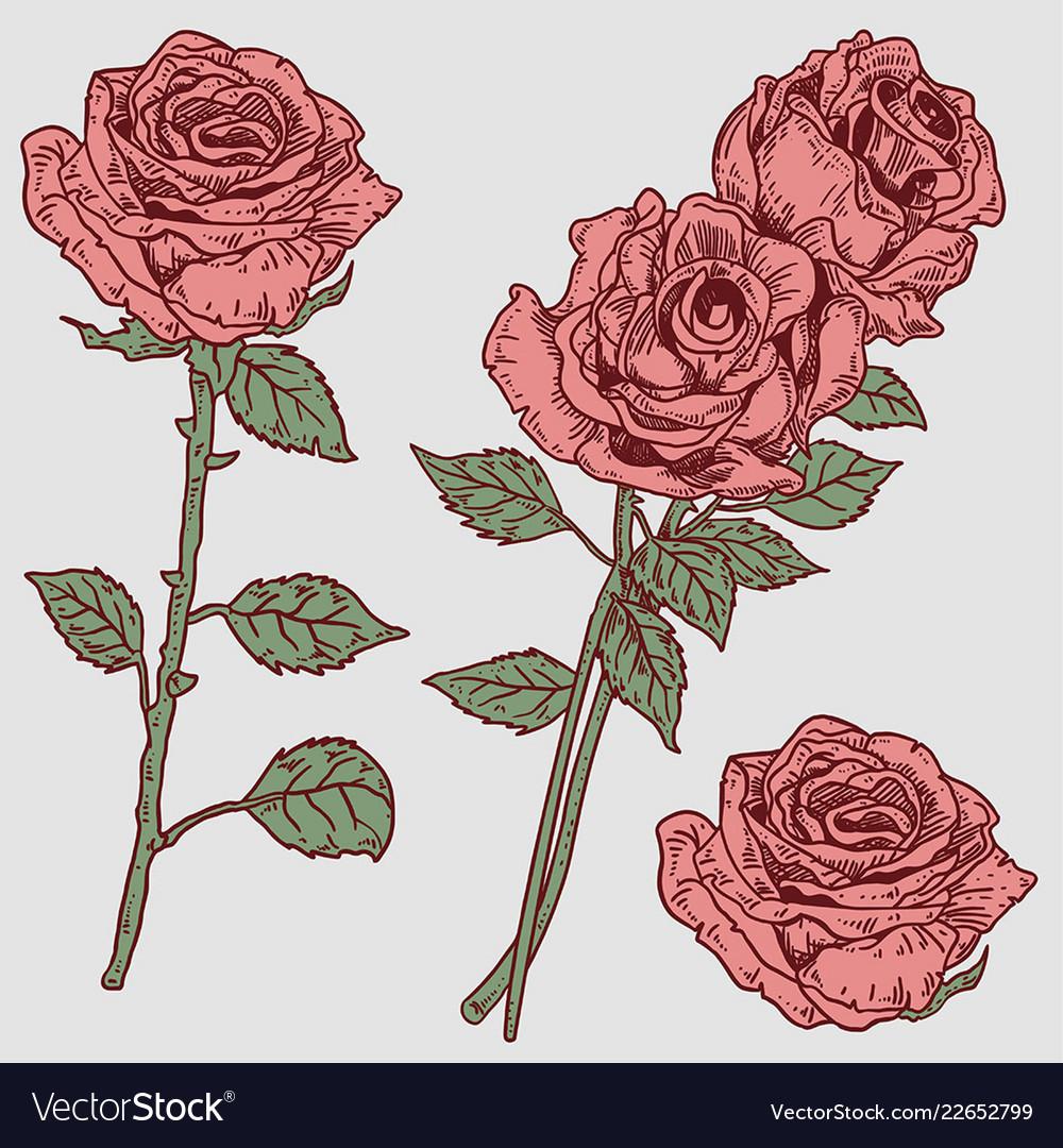 Rose engraved vintage