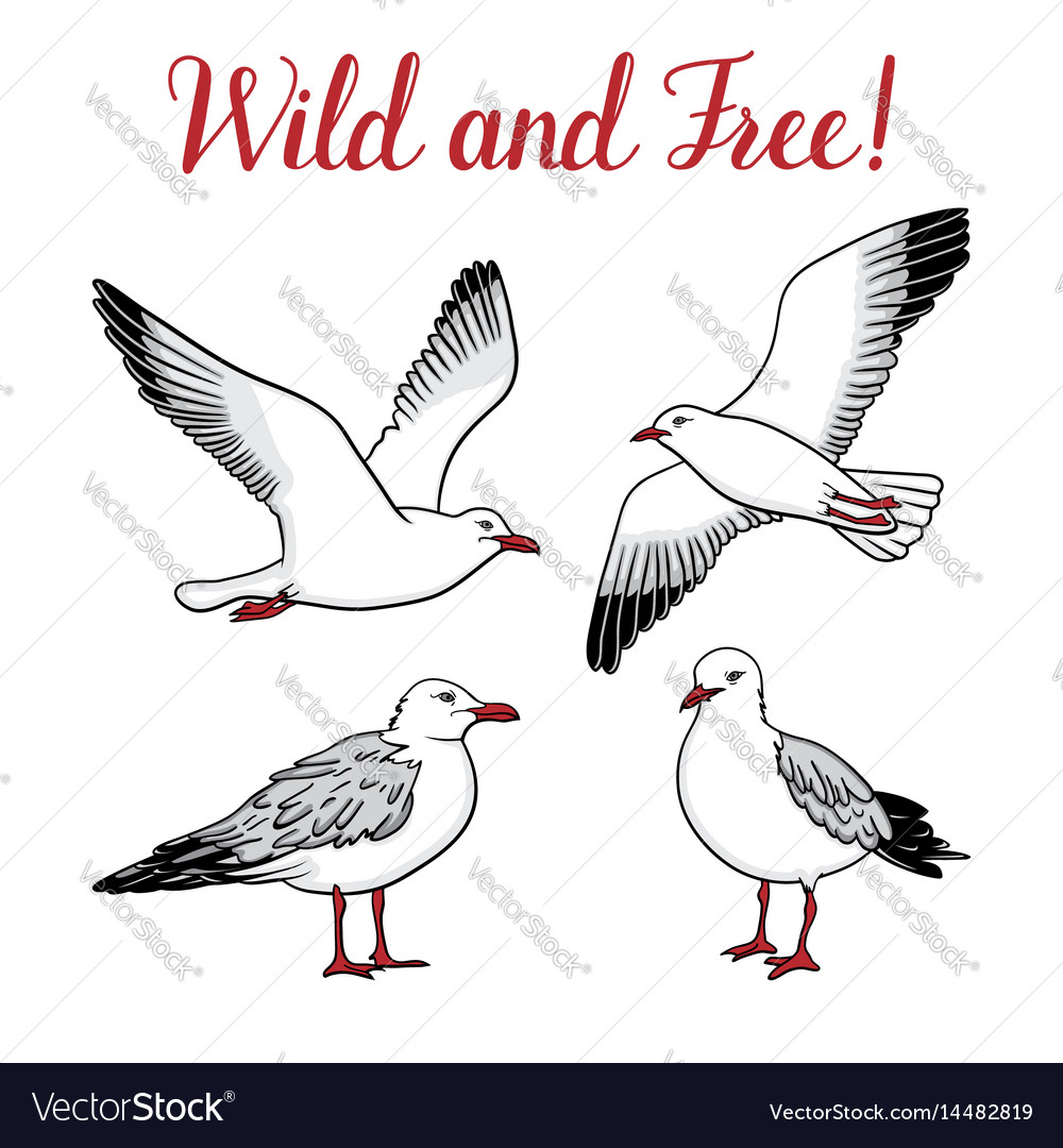 Set with seagulls on isolated white background